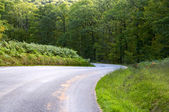 Curve road descending through a green forest — Stock Photo