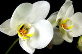Orchids 2 — Stock Photo
