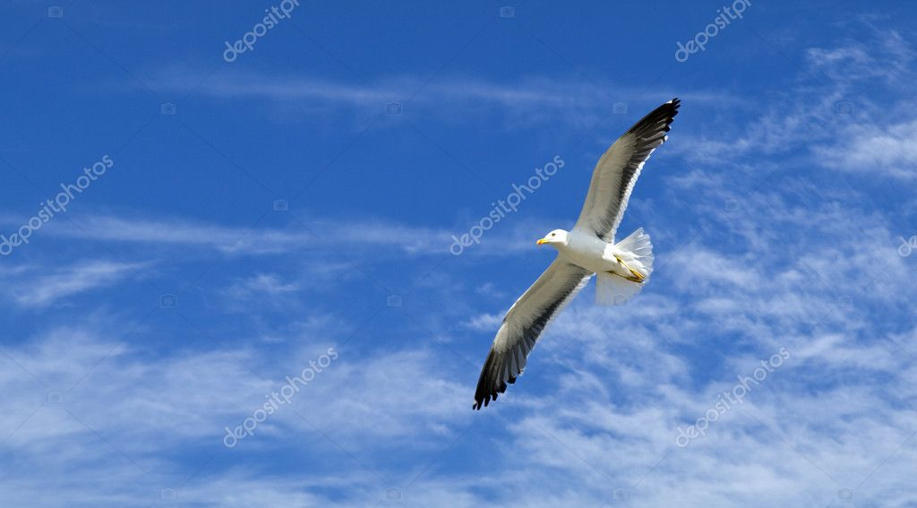 Seagull flying in the sky of Stavanger, Norway — Stock Photo #3135580