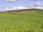 Prairie de guadalajara — Photo
