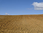 Drought Field — Stock Photo