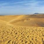 Dunes Panorama in Fuerteventura — Stock Photo #3190915