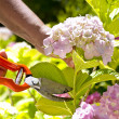 Pruning — Stock Photo #3194980