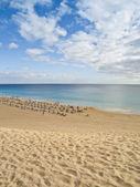 Strand von morro jable — Stockfoto