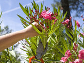 Woman pruning her plants — Stock Photo