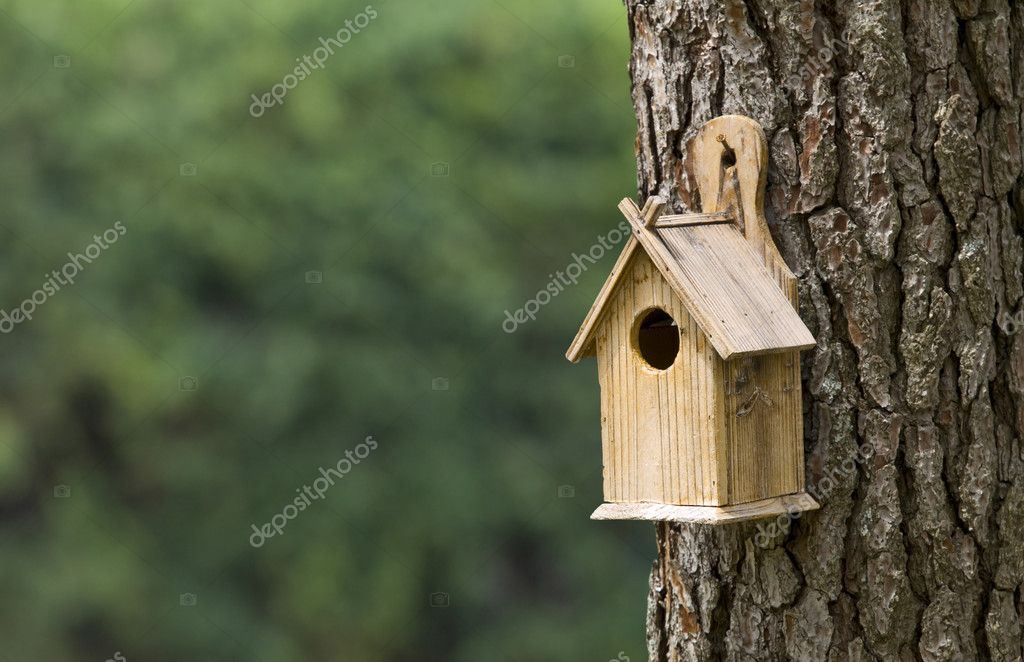 Bird House on a Pine Tree — Stock Photo #3194756