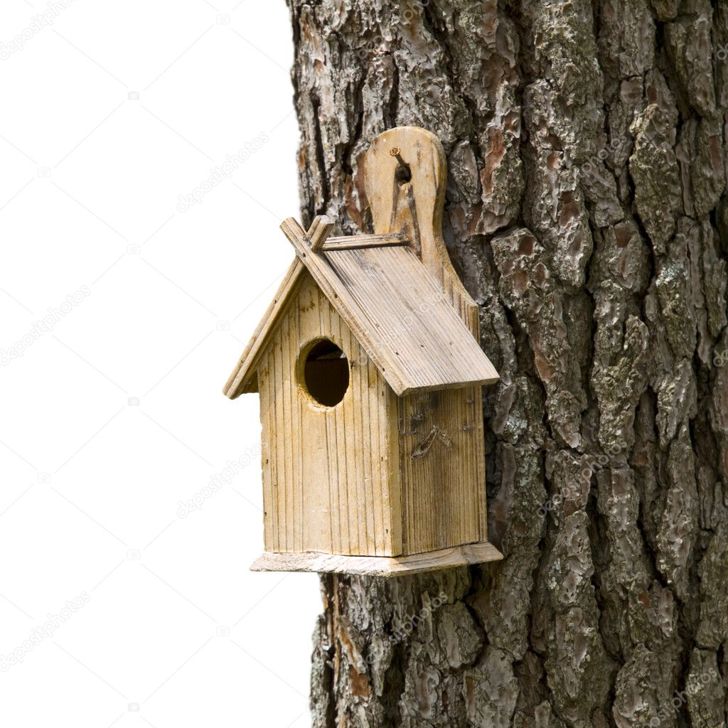 Bird House on a Pine Tree — Stockfoto #3194803