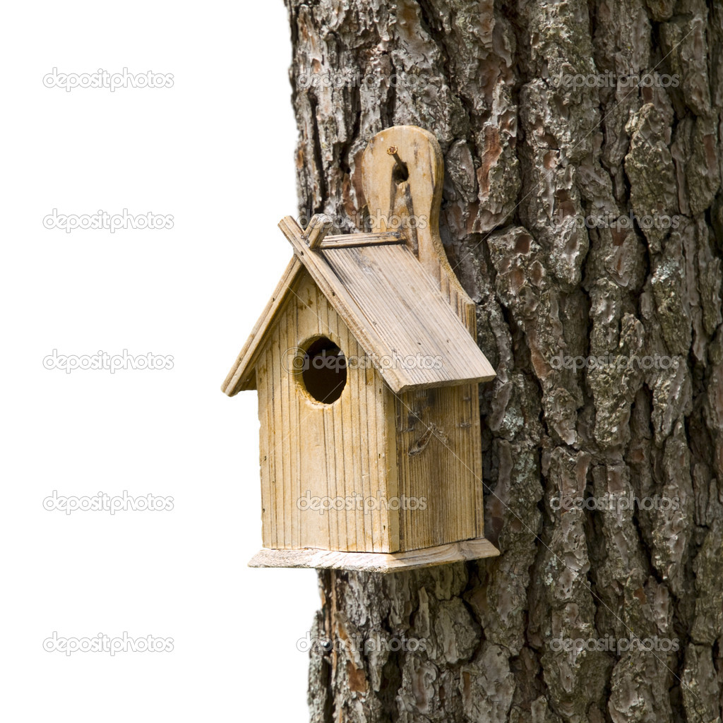 Bird House on a Pine Tree — Stok fotoğraf #3194803