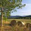Bale Field — Stock Photo