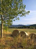 Bale Field — Stock Photo