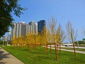 Alberi verniciati nel campo del maggiordomo, chicago — Foto Stock