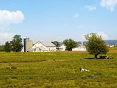 Amish Farm, Lancaster USA — Stock Photo