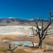 Yellowstone National Park: Mammoth Hot Springs — Stock Photo