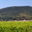 Wine Village in Pfalz, Germany (Weinstra - Stock Photo