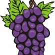 Stock Vector: Juicy cluster of grapes