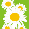 Five beautiful camomiles - Imagen vectorial