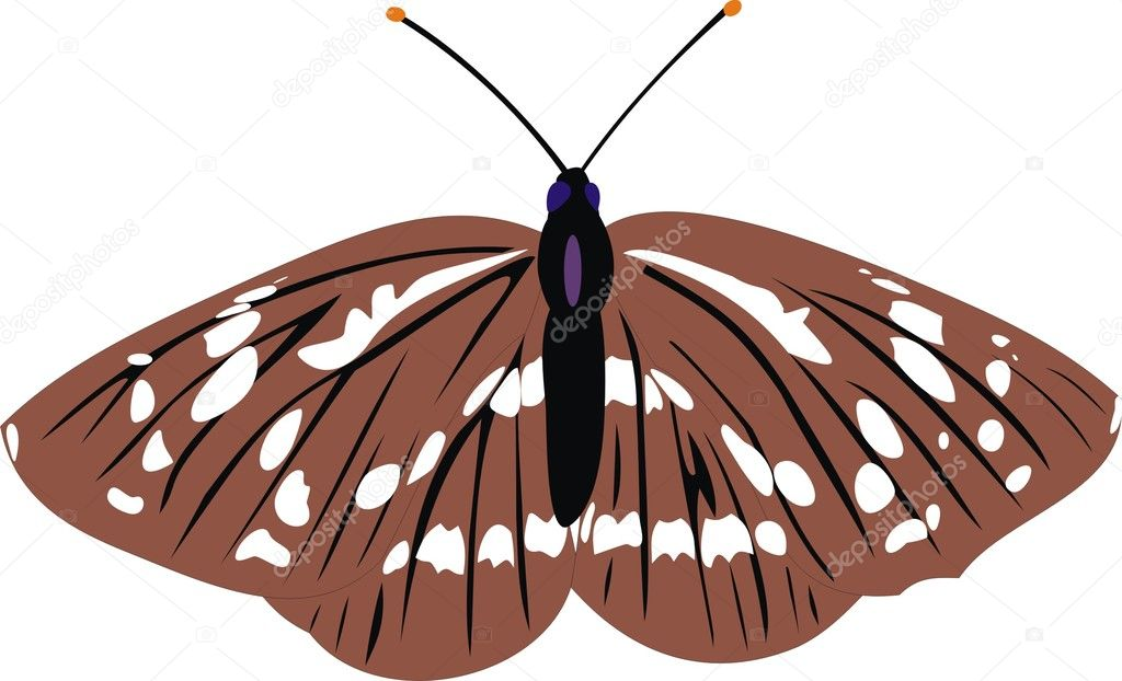The gray butterfly. A vector illustration — Stock Vector #3591923