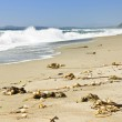 Coast of Pacific ocean in Canada — Stock Photo #4465918
