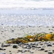 Beach detail on Pacific ocean coast of Canada — Stock Photo