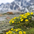 Prairie alpine dans le parc national jasper — Photo