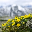 Alpine meadow in Jasper National Park — Stock Photo #4466093