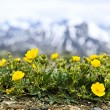 Alpine meadow in Jasper National Park - Stock Photo