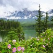 Stock Photo: Wild roses and mountain lake in Jasper National Park