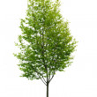 Isolated young tree — Stock Photo