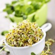 Foto Stock: Sprouts in cups