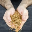 Royalty-Free Stock Photo: Hands pouring grain