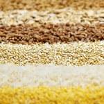 çeşitli tahıl yakın çekim — Stok fotoğraf