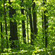 Green spring forest — Stock Photo #4467852