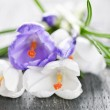 Spring crocus flowers — Stock Photo #4468050