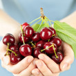 Hands holding bunch of cherries — Stock Photo