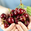 Hands holding bunch of cherries — Stock Photo #4468151