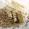 Whole grain wheat kernels closeup — Stock Photo #4468326