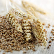 Whole grain wheat kernels closeup - Stock Photo