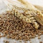 Whole grain wheat kernels closeup — Stock Photo