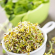 Stock Photo: Sprouts in cups