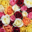 Background of rose blossoms — Stock Photo