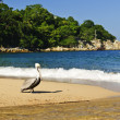Pelican on beach in Mexico — Stock Photo