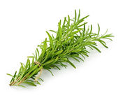 Rosemary sprigs — Stock Photo