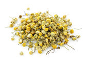 Medicinal chamomile herbs — Stock Photo