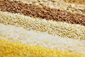 Various grains close up — Stock Photo