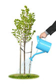 Businessman watering young tree — Stock Photo