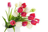 Red and white tulips — Stock Photo