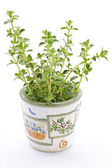 Fresh thyme on white background — Stock Photo