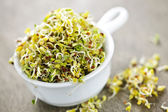 Alfalfa sprouts in a cup — 图库照片