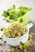 Sprouts in cups — Stock Photo