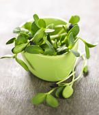 Green sunflower sprouts in a cup — Stock Photo